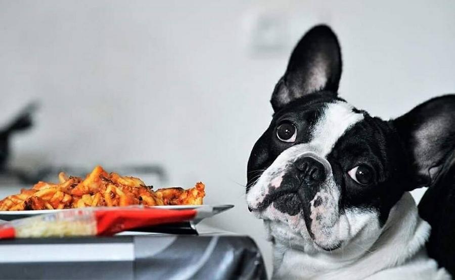 Comment réduire les problèmes de digestion de votre bouledogue français